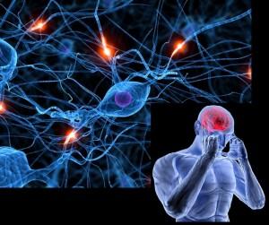 Нервная ткань при белковой диете