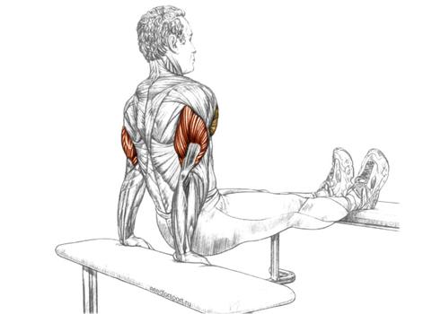 мышцы отжимания