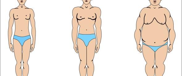 эктоморф жир на животе